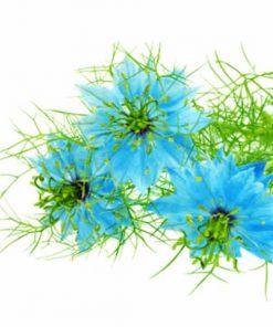 Vôňa do mydla damaškový kvet